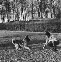 Alain Delon poster